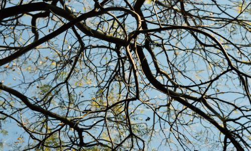 Clear Branches From Roof